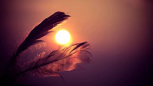 native feather-in-the-sun.jpg