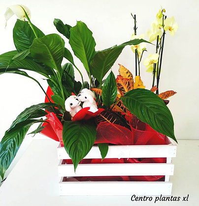 Centro plantas