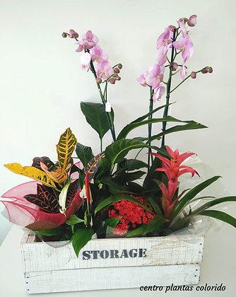 Centro planta colorido