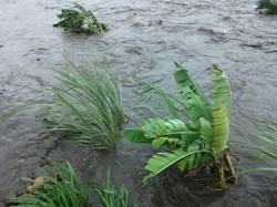 3 floods, crops washed away.JPG