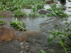 4 floods crops washed away.JPG