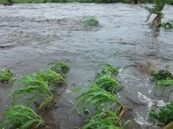 5 floods.JPG