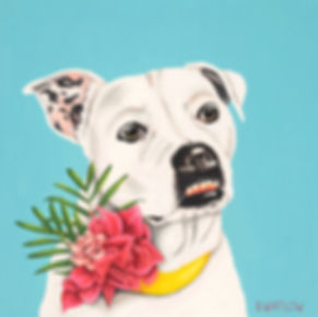 pitbull with a flower collar