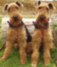 Roscoe and Boris Taylor 1a.jpg