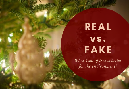 Real vs. Fake Christmas Tree?