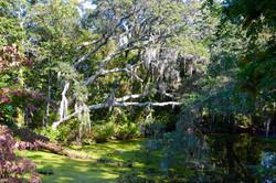 Scummy Pond 1