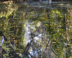 Airlie Reflections 2