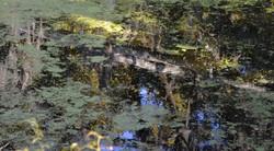 Scummy Reflections 1