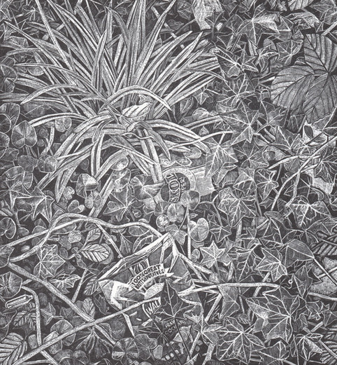 Undergrowth  灌木丛下  203 x 190mm  £145 Edition size: 30  Plants growing wild in an urban space.  城市空间中的野生植物。