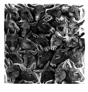 Donkey Sanctuary  驴圣所  170 x 170mm   £100 Edition size: 200