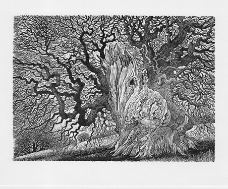 Weathered Chestnut  风化栗木  110x150mm   £95 Edition size: 200  Engraving of an ancient tree seen in a field in Kent.  肯特郡田野中一棵古树。