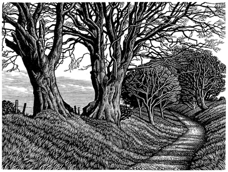 Lewesdon Hill Beeches  罗文斯顿的山毛榉树  115 x 150 mm   £245 Edition size: 150  Hollow Way track  路面低于路两边的羊肠小道