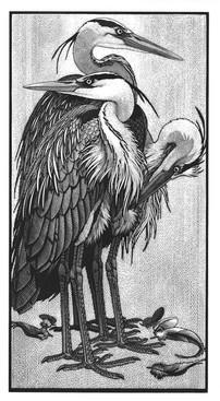 Siege of Herons II  群鹭 II  375 x 200mm   £495 Edition size: 75