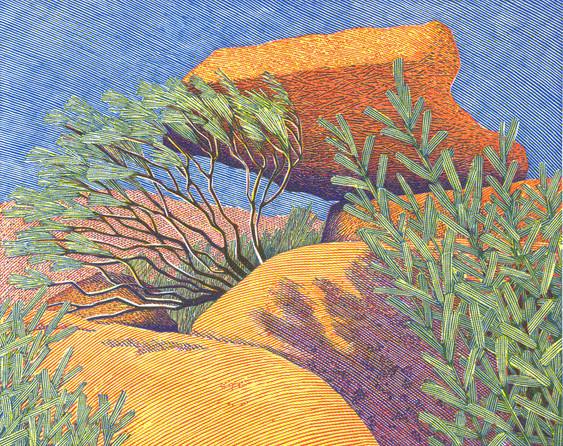 Lurched  倾侧  100 x 127mm  £230  Edition size: 50  Tibooburra National Park, Outback Australia  蒂博博拉国家公园,澳大利亚内陆地区