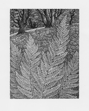 Into the Woods  走进森林  140 x 115mm   £90 Edition size: 150  Inspired by ferns and wild flowers in an English wood.  灵感来自于英国森林中的蕨类植物和野花。