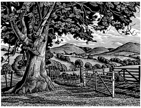 Wayside Ash Tree  路边的梣树  115 x 150 mm   £245 Edition size: 150  A landscape in the Welsh Mountains  威尔士山区的风景
