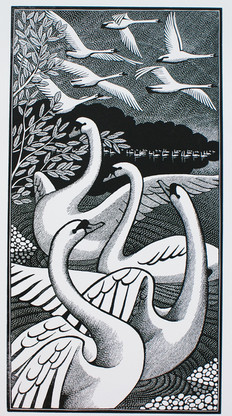 Wild Swans  野天鹅  190 x 100mm  £125 Edition size: 50  An illustration for 'The Wild Swans at Coole' by W. B. Yeats  为叶芝的诗歌《库尔的野天鹅》所作的插图