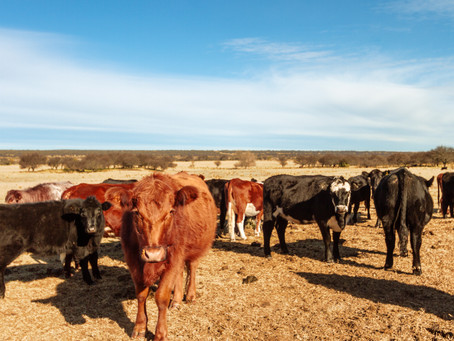 MACRO MINERALS IN LIVESTOCK PRODUCTION SYSTEMS