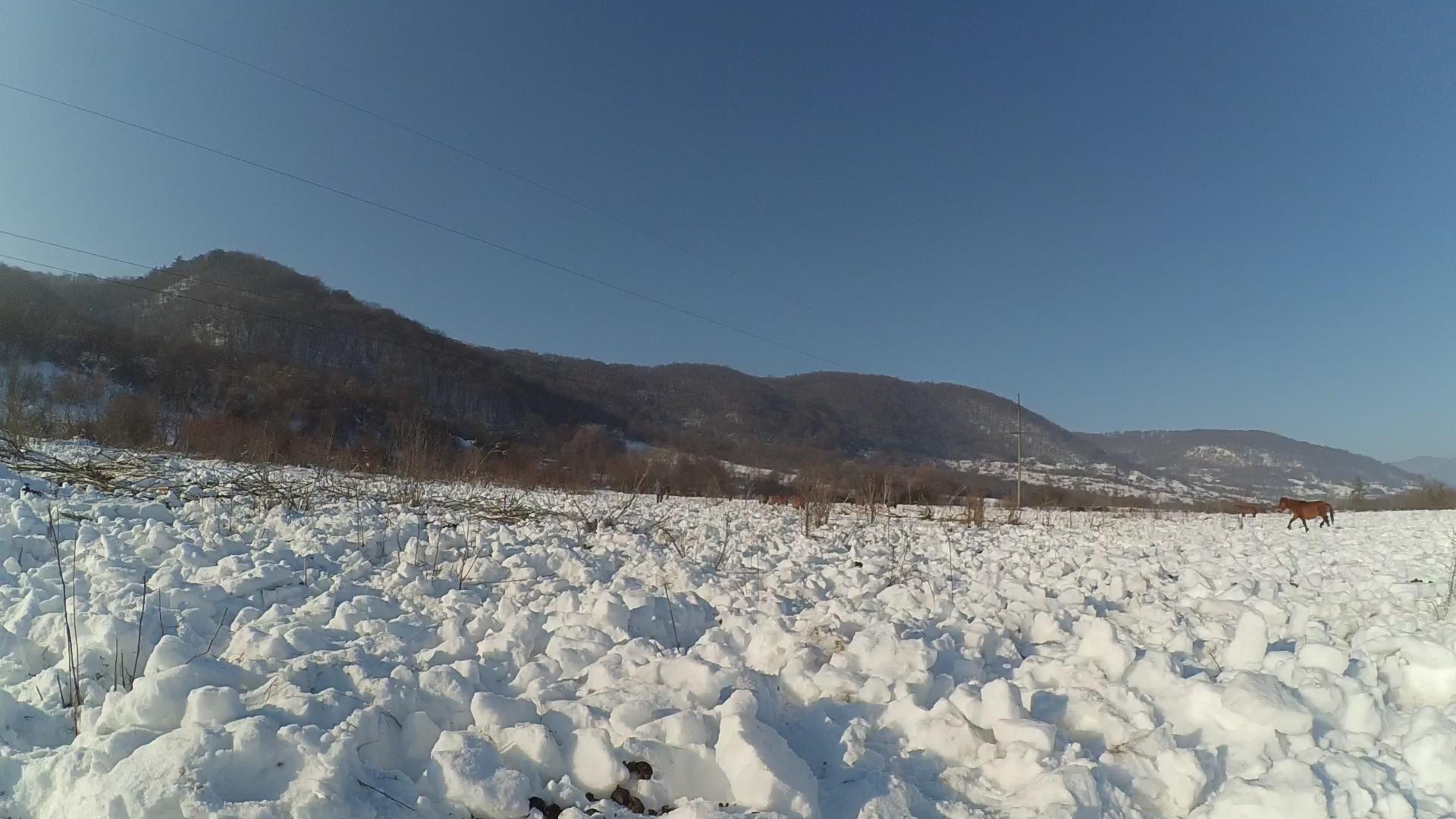 перекопаний кіньми сніг