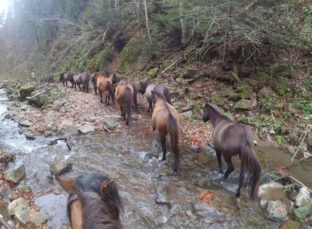 Набір учасників для перегону табуна коней (на молодих конях)