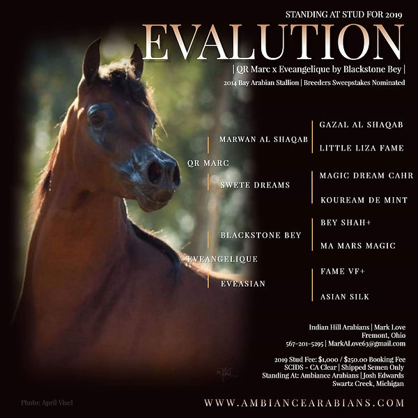 Evalution Stallion ad 1.jpeg