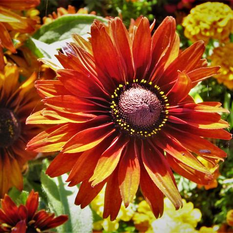 flowers 023.jpg