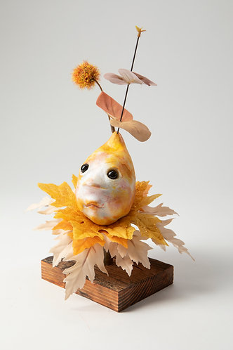 Sneezewart - Midling Autumn Bulb Head
