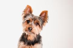 fotograf-mascotas-andorra-escaldes-marti