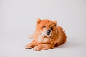 andorra-mascotas-gos-gat-fotografia-esca