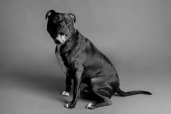 fotografia-perro-gato-mascotas-gos-gat-a