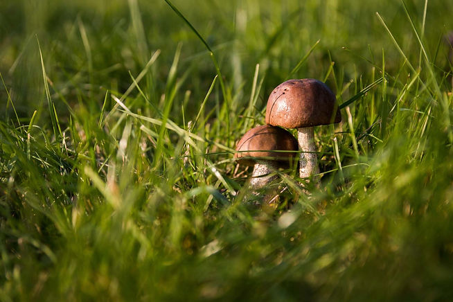 web_close-up-daylight-fungus-50672.jpg