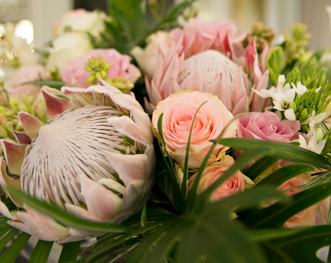 proteas 3_cropped_shutterstock_1515598244.png