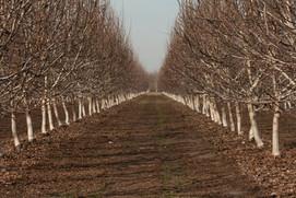 Ronald Martella Farms