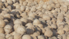 Grower Direct Nut Inshell Walnuts
