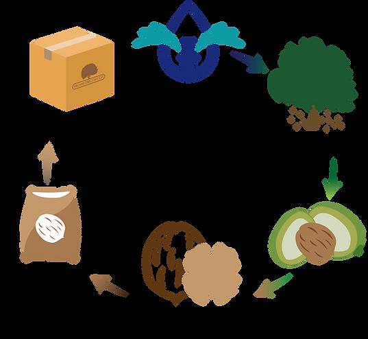 Company Process Illustration.png