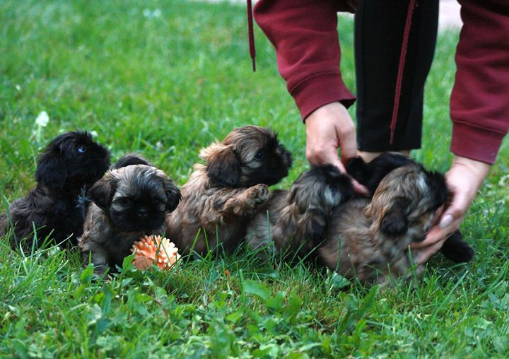 All the puppies