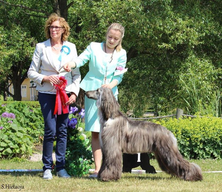 Finnish Afghan Hound Speciality