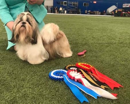 Saimaa Nordic Dog Show