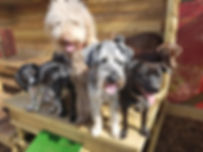fun dog daycare in torbay