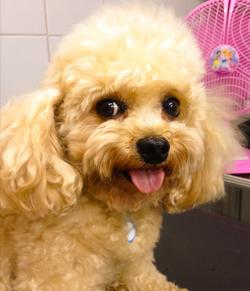 ZenPet- Acupuntura veterinária