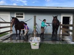 Horse Care Facility In Jupiter FL