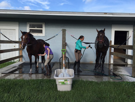 Horse Care Facility In Jupiter FL