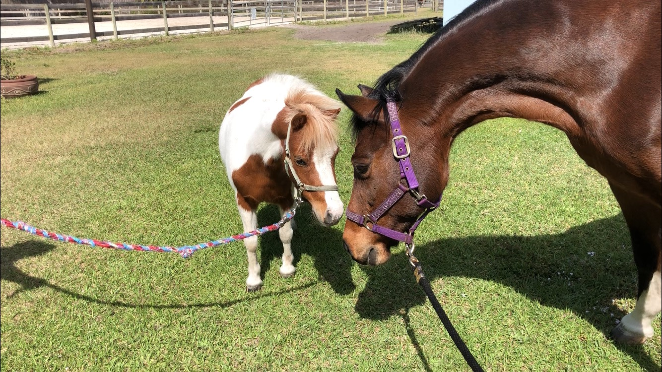Horse Care In Jupiter FL