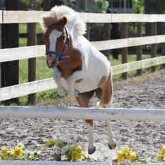 Riverbend Equestrian Riding Center