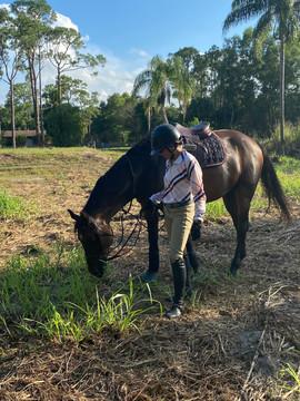 Horse Boarding South Florida