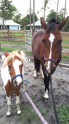 Horses In Jupiter Farms FL