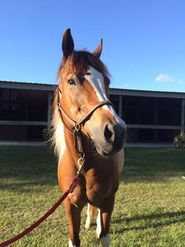 Care For Horses In Jupiter FL
