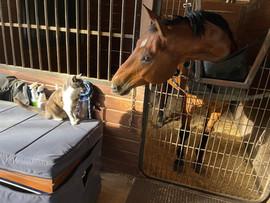 Gizmo & Horse.jpg