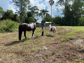 Horse Care in Jupiter