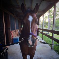 Horse Care In Jupiter Farms FL